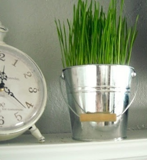 a galvanized bucket with wheatgrass is a fresh and bold idea for spring with a slight rustic touch
