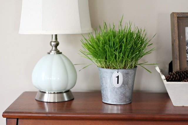a vintage bucket with wheatgrass and a tag is a lovely spring decoration with a slight vintage feel