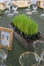 a box with wheatgrass and black pebbles is a stylish and ultra-modern wedding or just spring centerpiece
