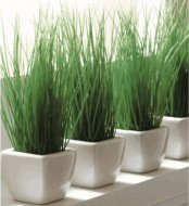 white porcelain planters with wheatgrass are stylish to add a fresh spring feel to the space