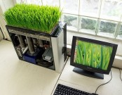 a mini garden with wheatgrass is a stylish idea for a modern spring-like space