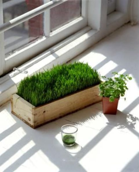 a wooden box planter with wheatgrass will make your space more spring-like and fresh