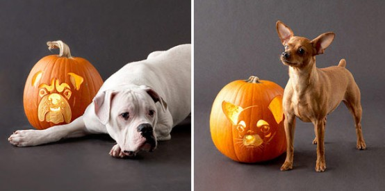 not so creepy dog faces is a nice change from the more frightening faces of halloween - Halloween Pumpkin Faces Ideas