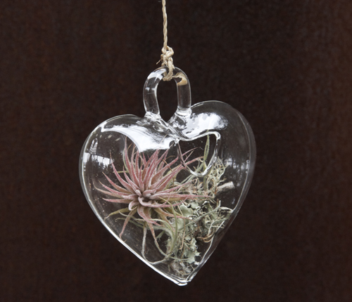 Heart Shaped Ornaments With Living Plants