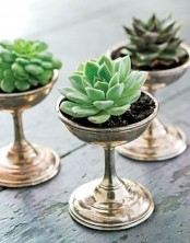 tall metallic bowls with succulents are cute decorations to go for and they can be used for adding a refined touch to the space