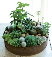 a tin can with lots of greenery, cacti and succulents plus pebbles looks very harmonious and very stylish