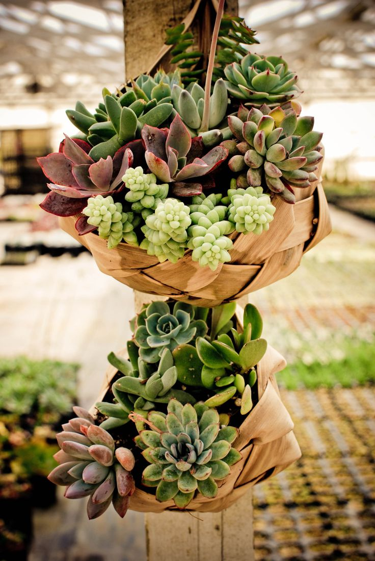 suspended baskets with succulents and greenery look stylish, chic and add a rustic feel to the space