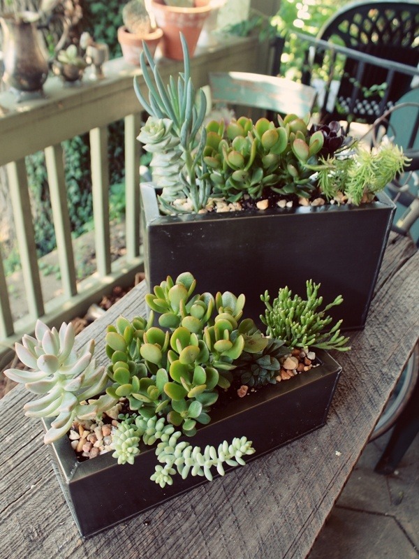 stylish black metal planters with pebbles, succulents and greenery are very elegant and modern, can be used both indoors and outdoors