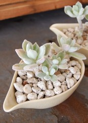 sauce pans with pebbles and succulents are stylish decorations to go for and can be used to accent tablescapes