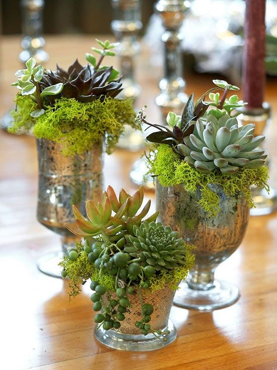How to display succulents cute examples digsdigs