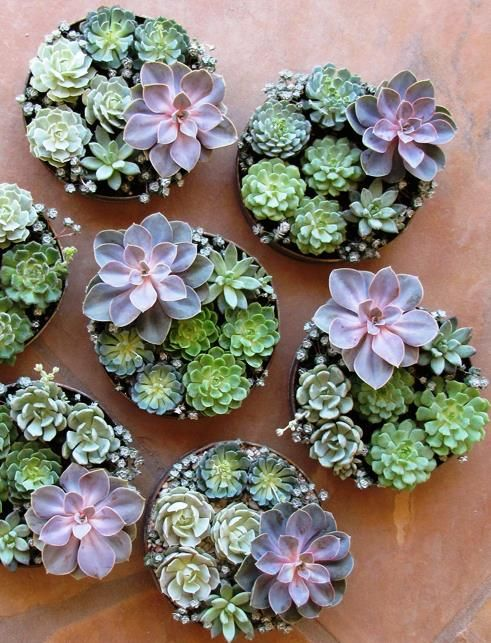 How to display succulents 30 cute examples digsdigs for Plante grasse exterieur