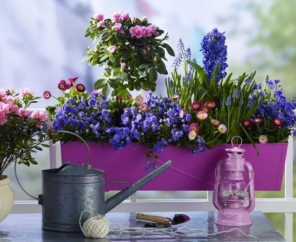 a purple metal planter with bright blooms is a cool summer decoration for indoors and outdoors with a vintage feel