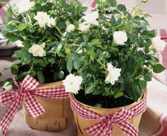 plywood planters with white blooms and plaid ribbons are rustic chic decorations for any indoor or outdoor space