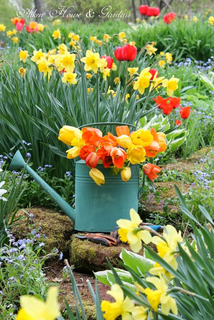 place a vintage watering can with colorful tulips in your garden or on the porch to give it a spring feel at once