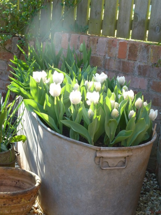 a white metal bathtub with white tulips is a cozy rustic decoration for spring, plant them inside