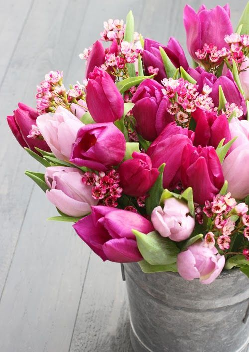 a bucket with pink and fuchsia tulips and pink cherry blossom is a bold rustic decoration for indoors and outdoors with a gorgeous aroma