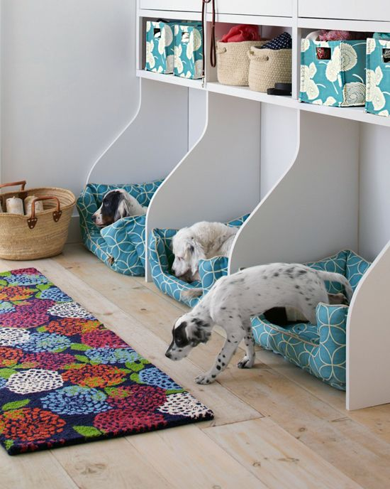 Picture Of how to organize all your pet supplies comfortably ideas  2