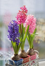 a forged stand with colorful planters with matching hyacinths is a bright and bold idea for a spring space