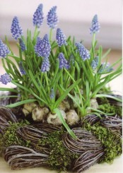 a vine nest with moss and lots of hyacinths is a lovely rustic idea that will bring a fresh spring feel to the space
