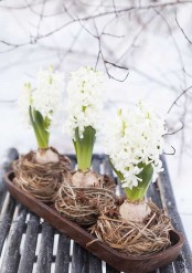 a wooden tray with hay and white hyacinths is a lovely spring decor idea to rock