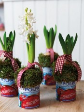 simple tin cans with moss and hyacinths and plaid ribbons is a pretty and fun idea with a modern feel that will bring a spring touch to the space
