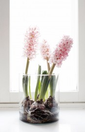 a glass with pink hyacinths is a lovely and fresh spring decor idea to rock