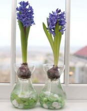glass vases with colorful buttons and bright purple hyacinths is a pretty and simple decor idea for spring