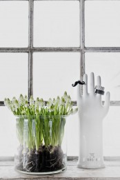 a sheer glass vase with multiple white hyacinths is a lovely decor idea that you may rock anytime