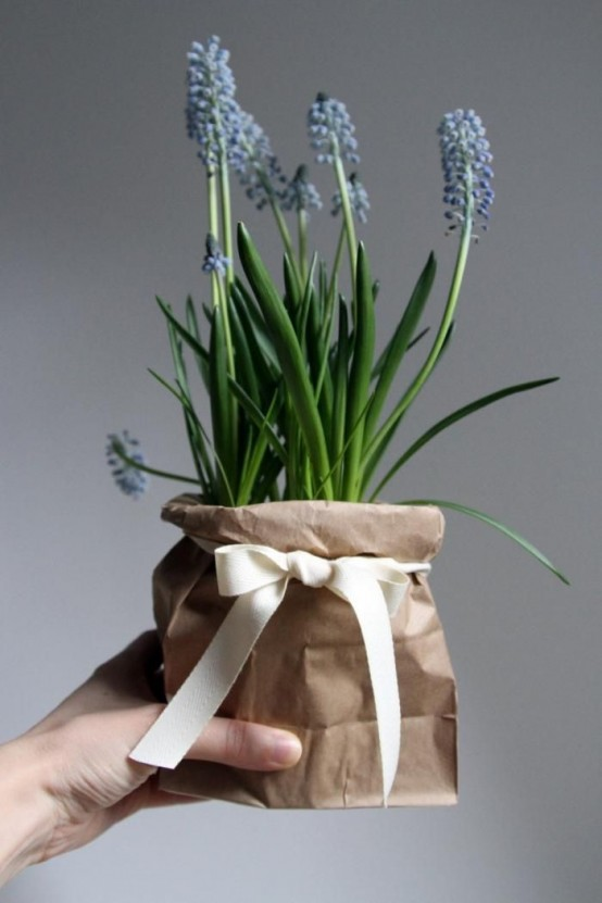 potted blue hyacinths wrapped in kraft paper and with a bow is a cute spring gift or just interior decoration to rock
