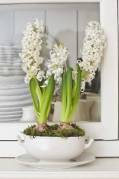 a white soup bowl with white hyacinths and moss is a lovely rustic centerpiece or decoration for spring with a vintage feel