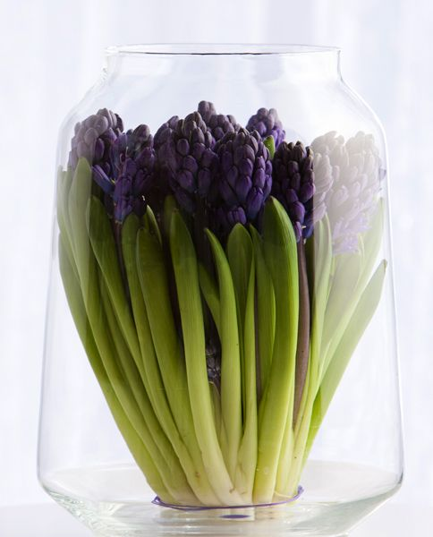 a large sheer vase with deep purple hyacinths is a pretty and cool idea for spring decor