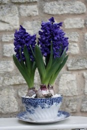 a blue floral teacup with purple hyacinths will bring a touch of color and spring to the space