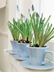 pretty blue teacups with blue hyacinths are amazing decoration for your windowsill, whatever room you choose