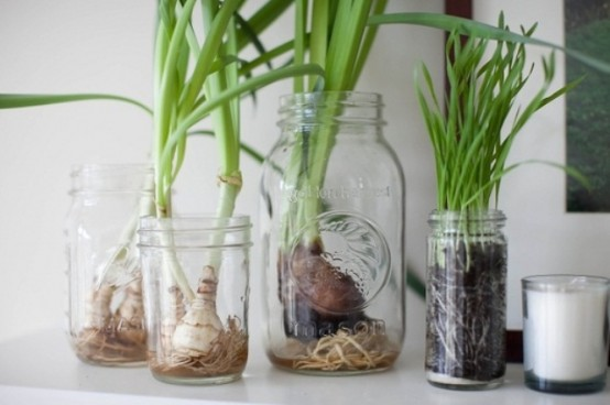 some bulbs in jars are a very refreshing and cool idea for spring
