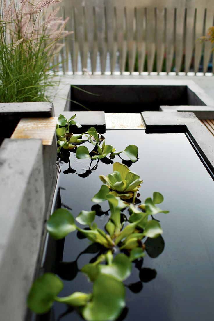 a minimalist Japanese garden with grasses and a couple of ponds with floating greenery