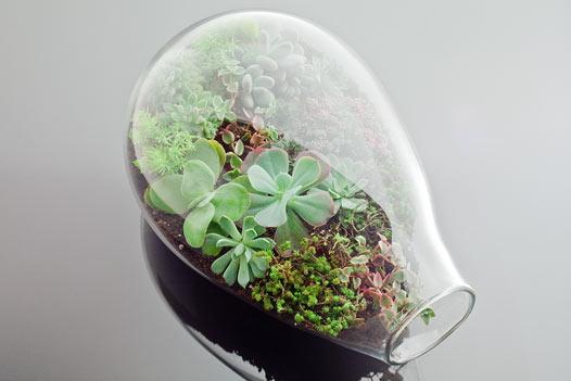 Kiwi Terrarium