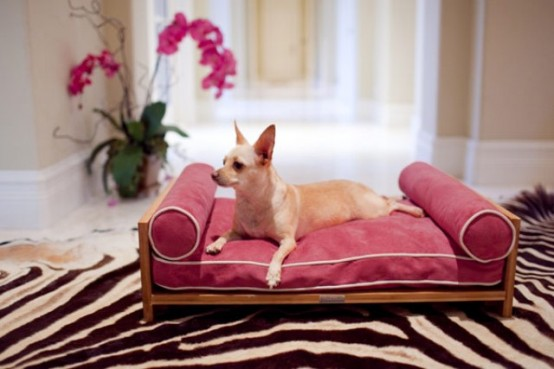 Luxurious Furniture For Spoilt Pets