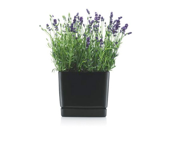 Minimalist Black Flowerpots From Bodum