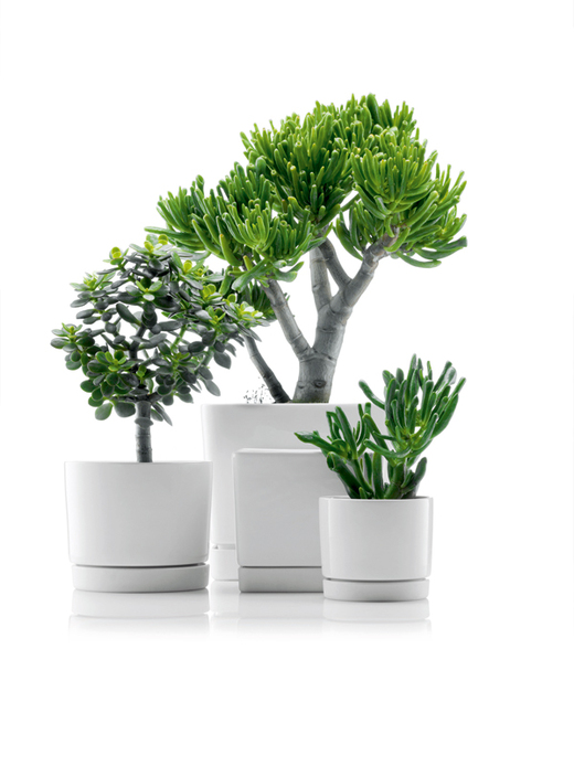 Minimalist Flowerpots From Bodum