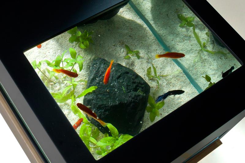 Modern Two Level Black And White Aquarium Digsdigs