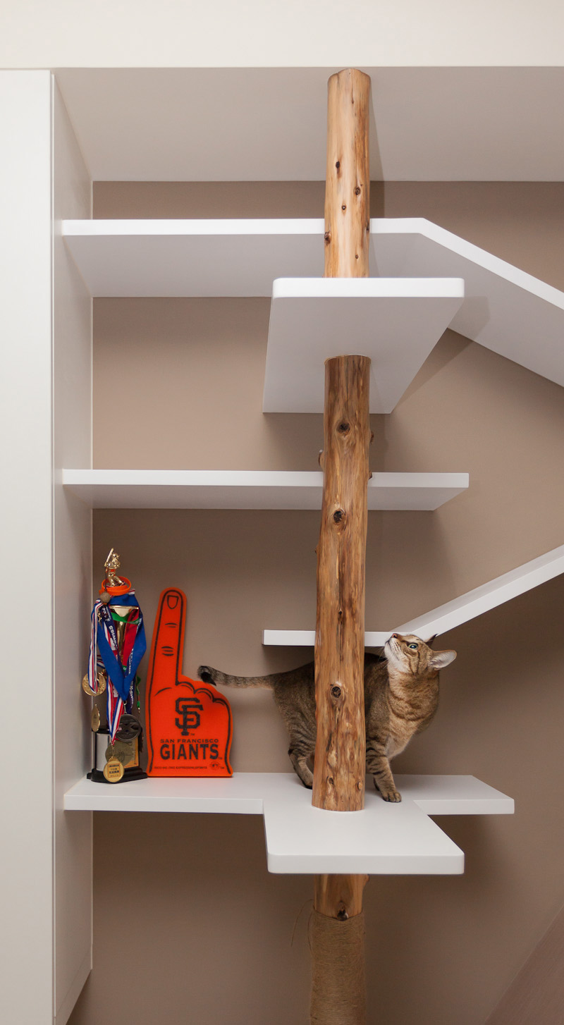 Picture Of modern custom shelving to keep the cat happy  5