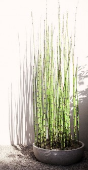 a concrete bowl with bamboo is an ultra-modenr piece, and such a planter can be even DIYed