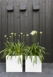 large white square planters with blooms look chic and very elegant, they refresh any outdoor space