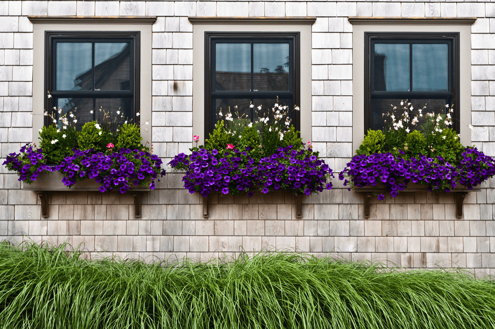 planter boxes with bright purple and white blooms will keep your spaces more private while adding beauty on the outside