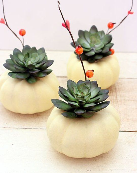 white pumpkins with succulents and berries on branches are nice for modern farmhouse Thanksgiving decor