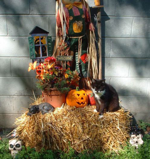 Outdoor Homemade Halloween Decoration Ideas, Cheap Outdoor