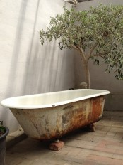 a shabby chic bathroom nook with a potted tree and a shabby chic bathtub