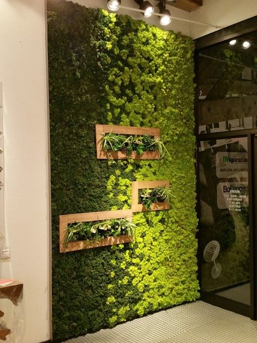 peaceful indoor living wall designs for any home - Wall Designs For Home