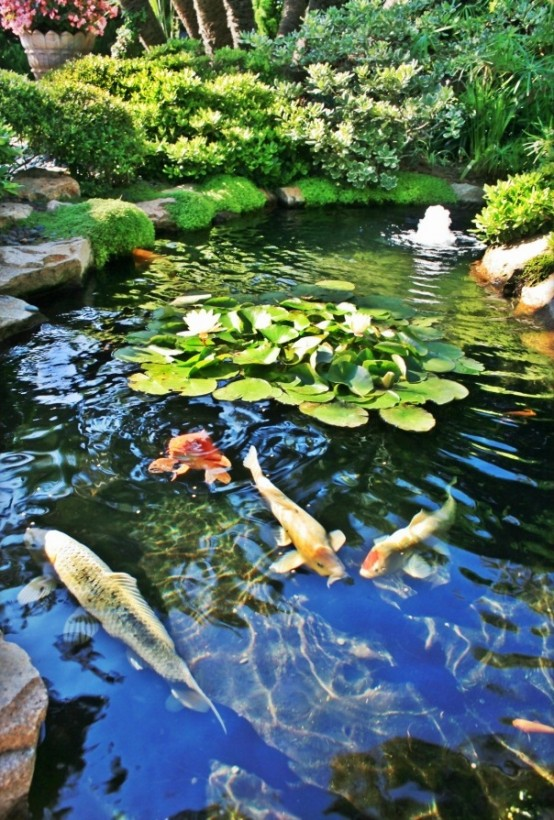 Colorful koi and goldfish bring hours of enjoyment to the Japanese garden. You can make the process of feeding them a really fun activity.
