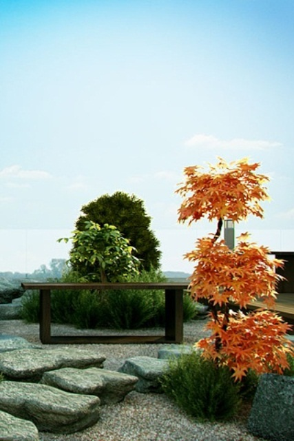 There are many kinds of Japanese maples that have different leaves colors and shapes. That make them as popular for designing a zen garden as different evergreens.